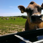 AFE wins another WRAP grant for an on-farm <250kW AD Business Plan